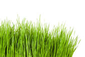Green grass copy space at the side — Stock Photo