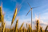 A wind turbine on the field — Stockfoto