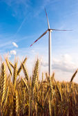 A wind turbine on the field — Stock Photo