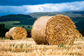 Bales of hay on meadow against the sky V1 — Stock Photo