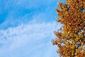 Colorida árvore contra o céu azul — Fotografia Stock