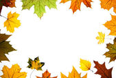 Autumn leaves space for text centered — Stock Photo