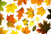 Many autumn leaves — Stock fotografie