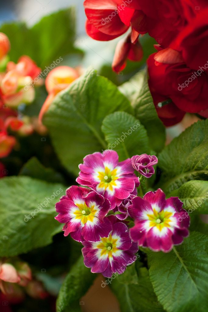 Various flowers in the shop — Stock Photo #8842396