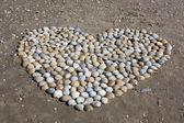Heart of Shells — Stock Photo