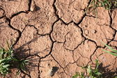 Drought Soil — Stock Photo