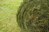 Hay stacks on the field — Stock Photo