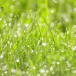 Green grass with water drops background — Stock Photo