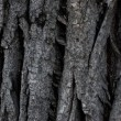 Dark grey tree rind — Stock Photo #10196366