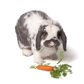 Grey and White Bunny Rabbit Eating Carrot and Greens — Stock Photo