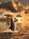 Dolphin floating at ocean — Stock Photo