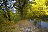 Autumn fall landscape — Stock Photo
