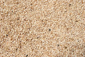 Raw Hulled Sesame Seeds — Stock Photo