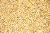 Hulled Pearl Millet Grain — Stock Photo