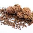 Sibiřský piniové oříšky a větev jehličí na bílém pozadí — Stock fotografie