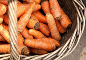 Fresh organic carrots in a wooden — Stock Photo