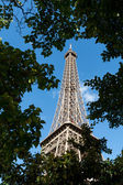 View of Eiffel tower through trees — Stock Photo