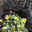 Army ankle boots and flowers. — Stock fotografie #10443021