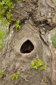 A hollow in the tree. — Stock Photo