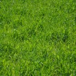 Stock Photo: The green lawn.