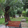 Bench near the tree. — Stock Photo