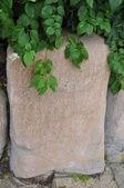 石の枝植物. — ストック写真