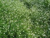 在一片绿色的草地上的草. — 图库照片