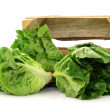 "Fresh ""little gem"" lettuce in a wooden crate — Stock Photo #8825028"