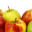 Assorted Dutch apple cultivars - Stock Photo