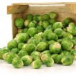 Freshly harvested brussel sprouts in a wooden crate - Stockfoto