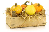 Colorful pumpkins and straw in a wooden crate — Stock Photo