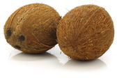 Two fresh coconuts — Stock Photo