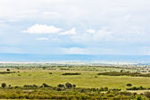 The Masai Mara — Stock Photo