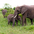 Two Elephants in Kenya — Stock Photo #8870003