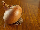 Onion Closeup — Photo
