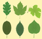 Collection of leaves (oak, maple, vine grape, walnut, chestnut, linden) — Stock Vector