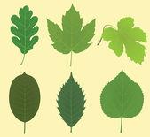Collection of leaves (oak, maple, vine grape, walnut, chestnut, linden) — Stock Vector