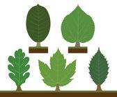 Walnut, linden, oak, maple and chestnut — Stock Vector