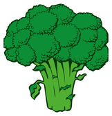 Broccoli — Stock Vector