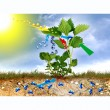 Stock Photo: Photosynthesis