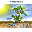 Photosynthesis — Stock Photo #10457997