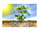 Photosynthesis — Stockfoto