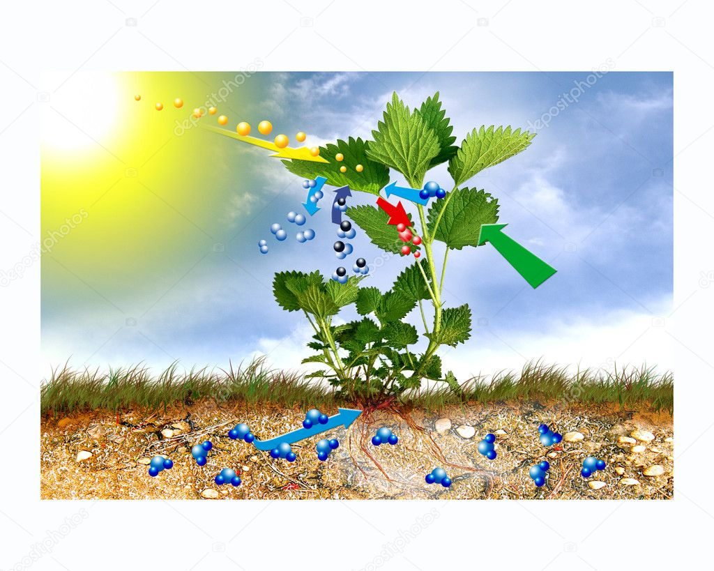 Showing the process of photosynthesis by nettle. — Stock Photo #10457970