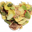 Heart shaped leaves — Stock Photo
