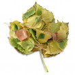 Leaves in a leaf — Stock Photo