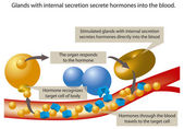 Hormones — Stock Vector
