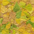 Stock Photo: Leaves background