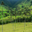 Salento and its palm trees, colombia - 