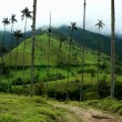 Salento and its palm trees, colombia - Stockfoto
