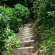 Foto Stock: Path through coffee farm, colombia